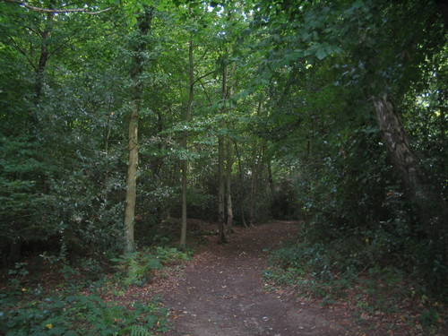 Path to the little wood