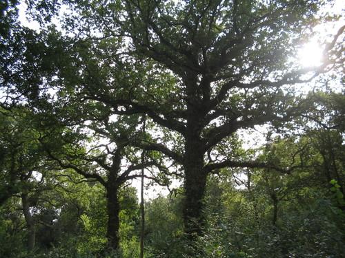 Brasenose Wood
